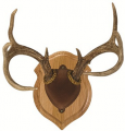 WALNUT HOLLOW Deluxe Antler Display Kit Walnut