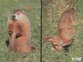 DELTA SPORTS PRODUCTS LLC Delta #108 Woodchuck & Rabbit Target