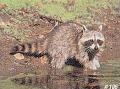 DELTA SPORTS PRODUCTS LLC Delta #106 Raccoon Target
