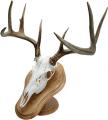 WALNUT HOLLOW Deluxe Euro Skull Display Kit