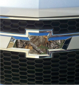 STOLTZ ENTERPRISES INC Auto Emblem Kit Xtra Camo