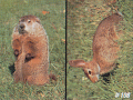 DELTA SPORTS PRODUCTS LLC Delta #108 Woodchuck & Rabbit Target